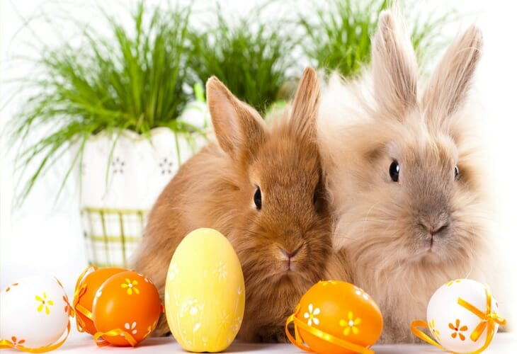 Easter Bunnies Hd Wallpaper Background