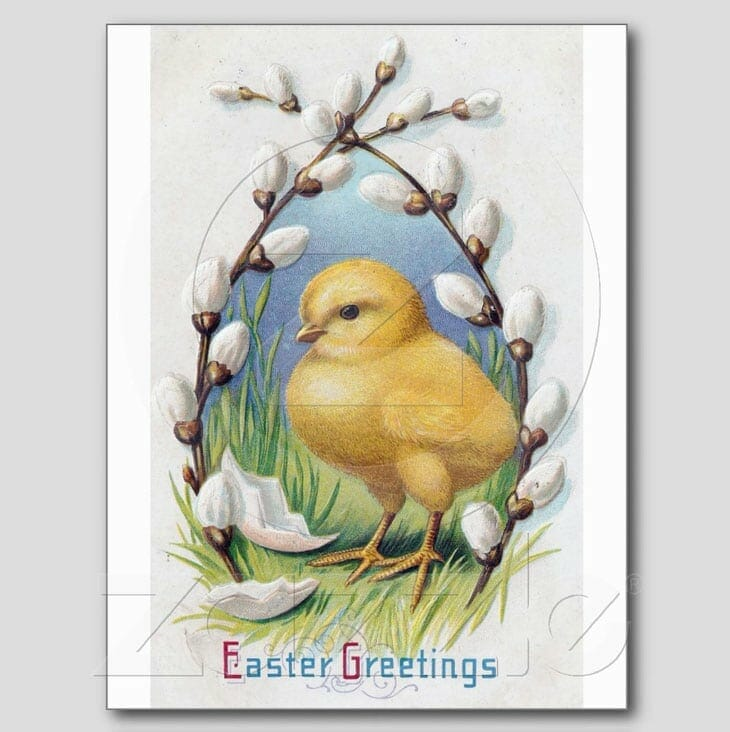 Easter Greetings Yellow Chick Post Cards