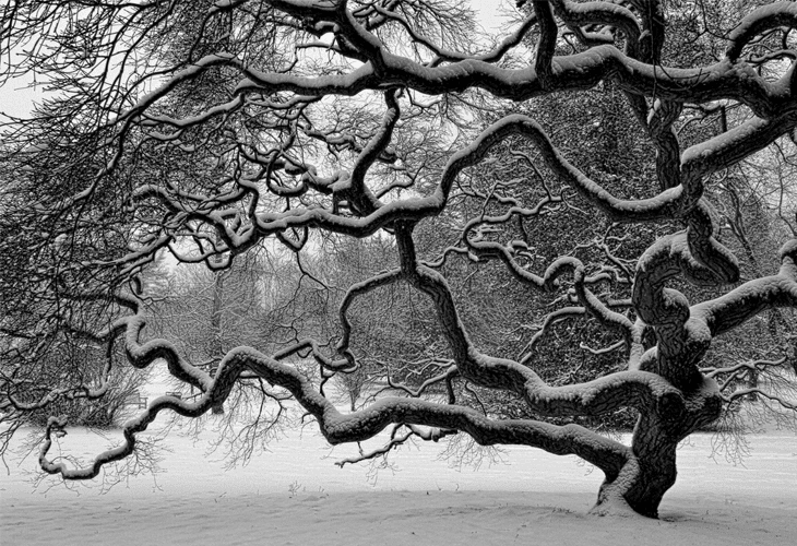 Nature Photography - Winter Tree