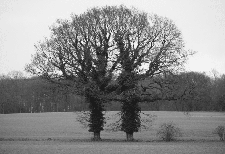 Yin and Yang Trees - Natural Photography