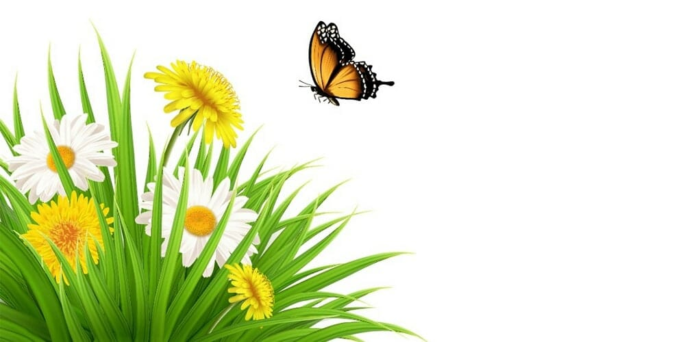 Nature-Scene-With-Dandelions-and-a-Butterfly