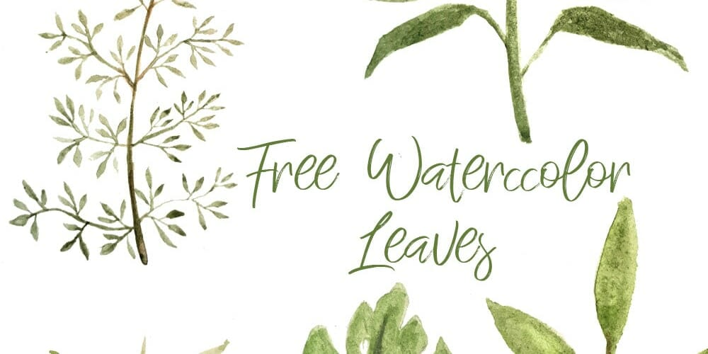 Free Watercolor Leaves